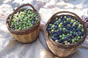 baskets-of-olives-300x199